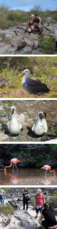 Galapagos Activities, Bird Watching