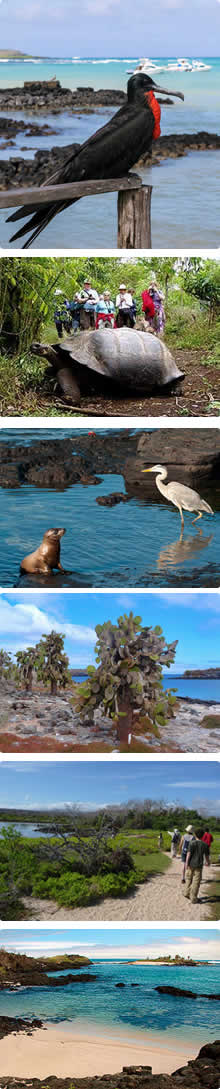 Tours Islas Galápagos, Tour Santa Cruz, Galapagos Dream